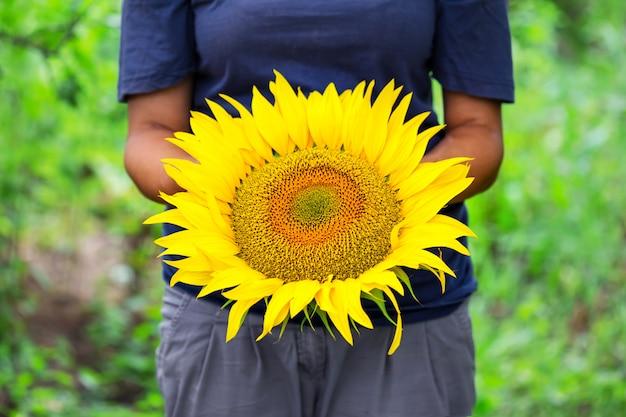 Sonnenblume in den händen der bäuerin
