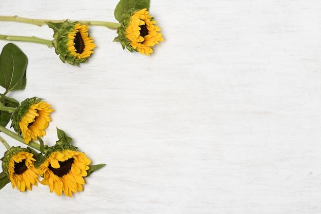 Sonnenblumen auf weißer oberfläche