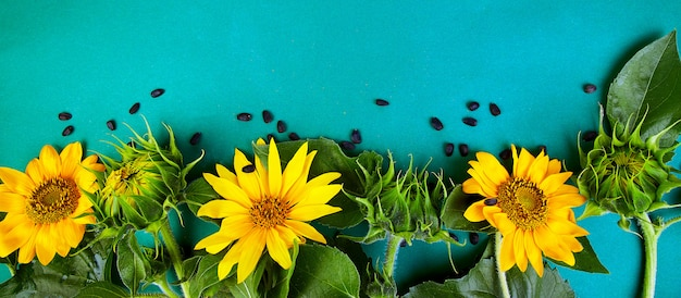 Sonnenblumen mit grünen blättern und sonnenblumenkernen