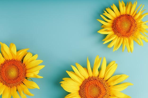 Sonnenblumenblüten auf blau