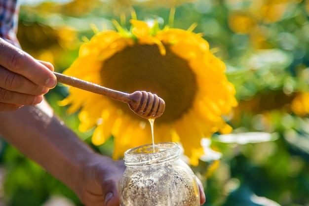 Sonnenblumenblütenhonig in den händen. selektiver fokus.