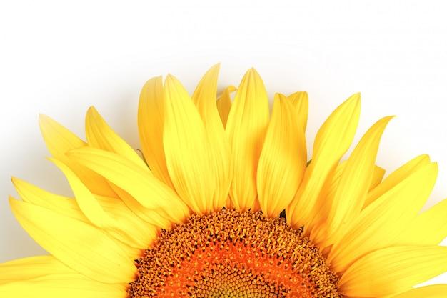 Sonnenblumenblume draufsicht lokalisiert