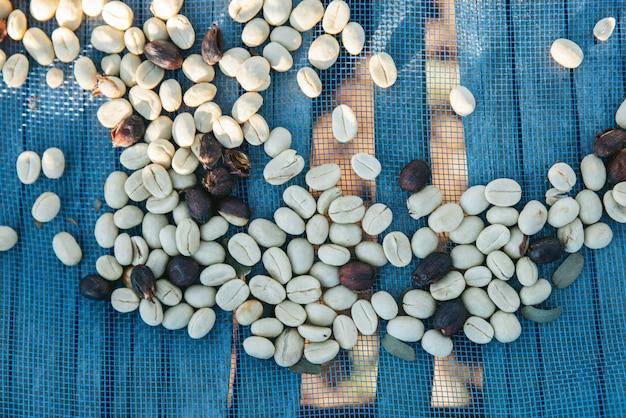 Sonnengetrocknete arabicakaffeebohnen auf blauem netz mit kopienraum im akha-dorf von maejantai auf dem hügel in chiangmai, thailand.