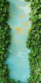 Sonnenlicht auf den ästen und blättern des efeu auf einem alten eisenzaun in blau. frühlingsweidenblattrahmen, platz für text in der mitte des hintergrunds kopieren