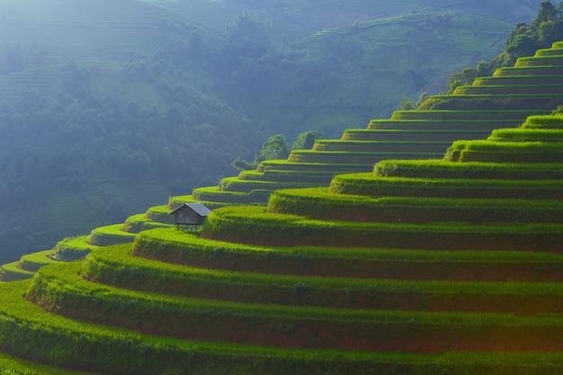 Sonnenlicht auf terrassenreisfeldern. reisfelder im nordwesten vietnams. mu cang chai, landschaftlich terrassiertes reisfeld in der nähe von sapa,