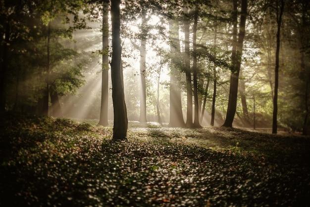 Sonnenlicht bedeckt die bäume im wald im herbst