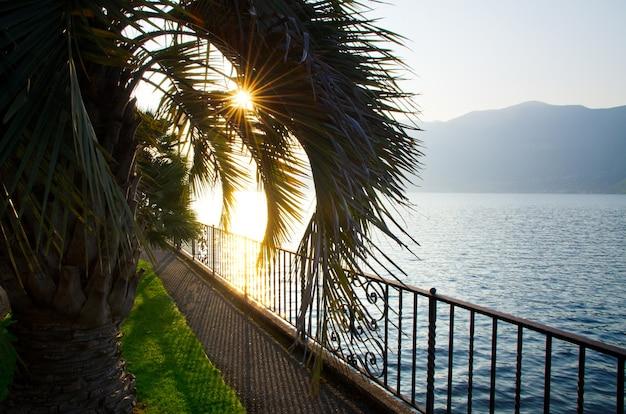 Sonnenlicht bedeckt die palmen auf dem körper des sees