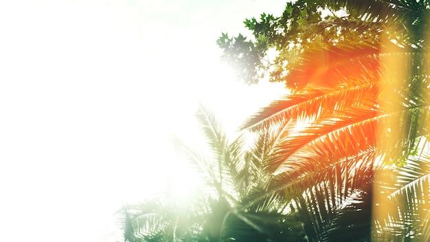 Sonnenlicht, das auf der palme shinning ist