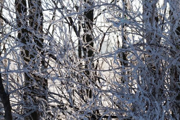 Sonnenlicht in einem laubwald mit bäumen in schnee und eis mit frost, morgenlicht