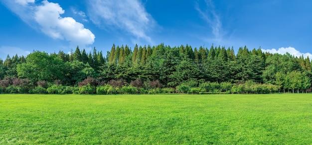 Sonnenscheinwald und grünland im park