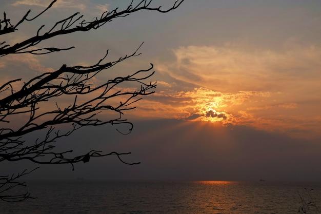 Sonnenstrahl in der sommerzeit mit den wolken, dem meer und dem großen ast des baumes.