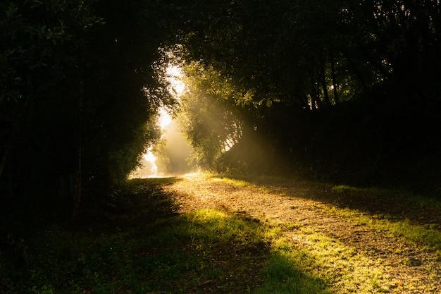 Sonnenstrahlen beleuchten einen weg mitten im wald