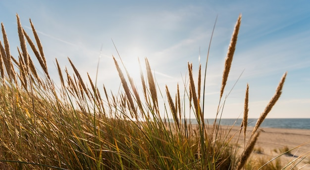 Sonnenstrahlen fegen bei sonnenuntergang die dünen der ostsee.