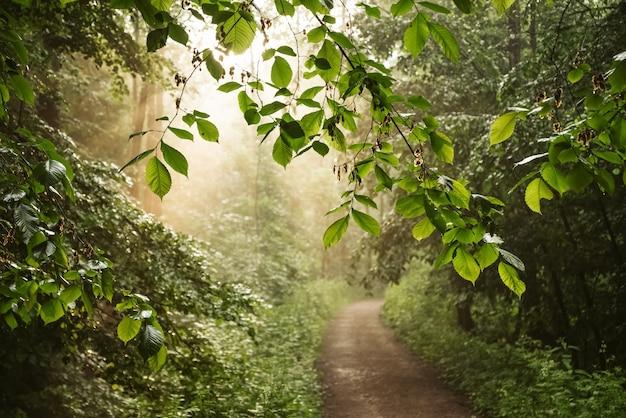 Sonnenstrahlen scheinen durch die blätter der bäume im park und beleuchten die unbefestigte straße, sommerlandschaft