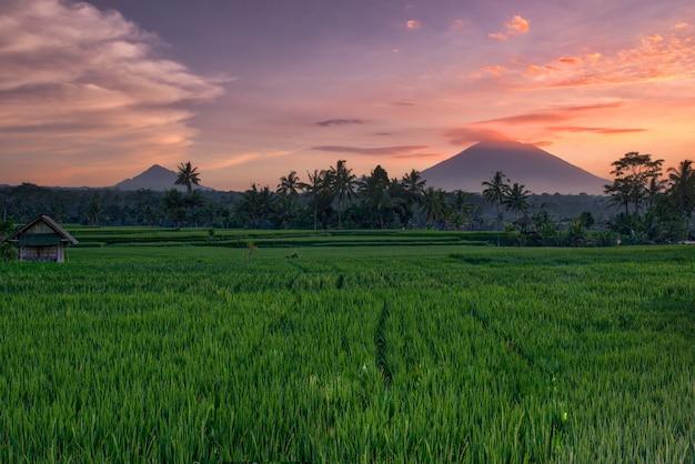 Sonnenuntergang an den reisfeldern in bali
