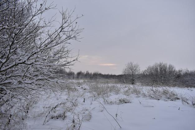 Sonnenuntergang auf einem verschneiten feld im winter