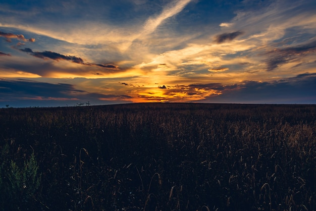 Sonnenuntergang bewölkter himmel über dem getreidefeld