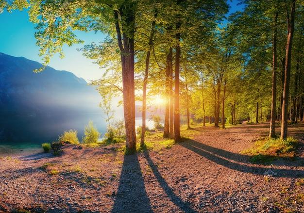 Sonnenuntergang bricht zwischen den bäumen. der weg in die berge