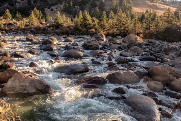 Sonnenuntergang, der auf kiefernwald mit dem wasserfall fließt in nationalpark scheint