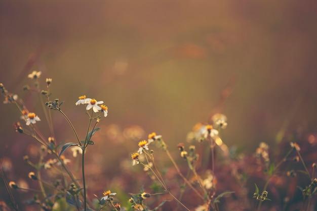 Sonnenuntergang der wilden blume, natursonnenuntergang mit dem blumengras