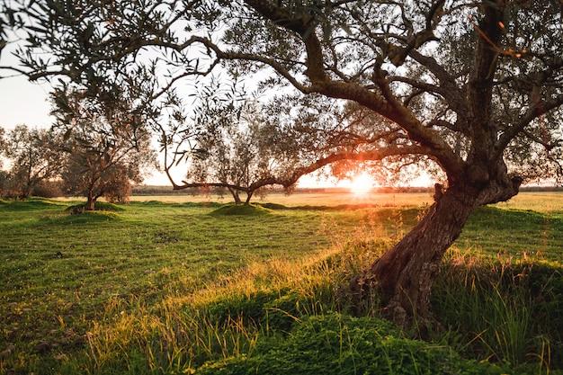 Sonnenuntergang in der landschaft mit vielen bäumen in einer wiese