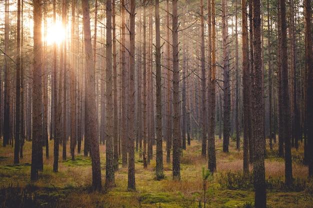 Sonnenuntergang in einem herbstpark in nowy targ, polen