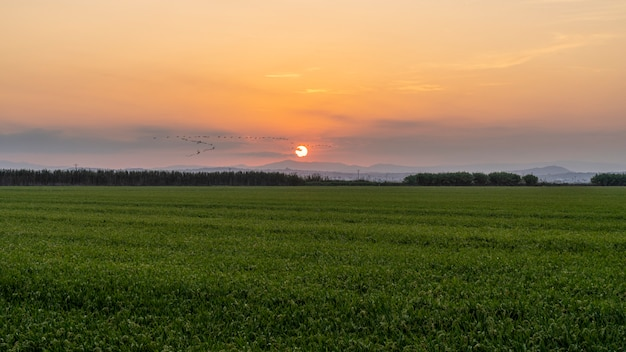 Sonnenuntergang in einem reisfeld