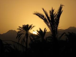 Sonnenuntergang in fujairah, palmen