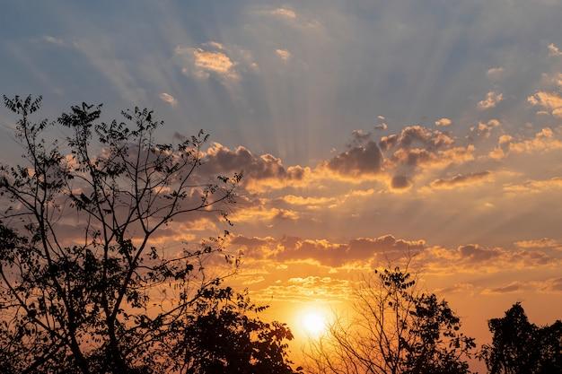 Sonnenuntergang mit goldenem licht, das flauschige weiße klammern badet