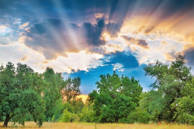 Sonnenuntergang mit sonnenstrahlen über grünen bäumen in einem wald