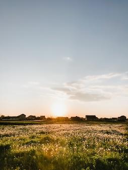Sonnenuntergang natur horizont wiese draußen wolken sommer hintergrund. sonne scheint zu löwenzahn