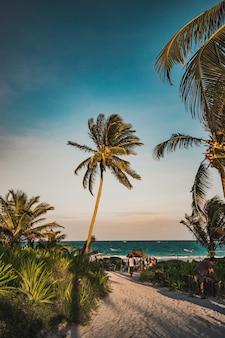 Sonnenuntergangansicht in tulum an der tropischen küste. palme und strand in quintana roo, mexiko.