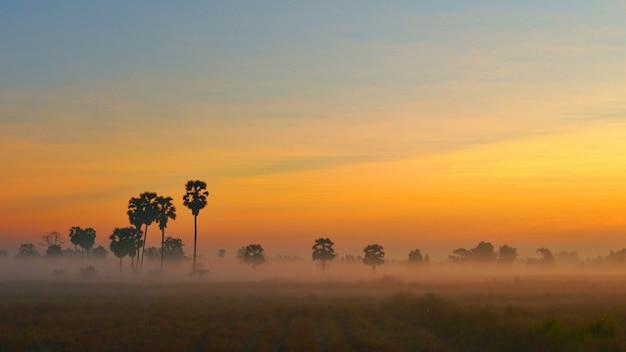 Sonnenuntergangdämmerungshintergrund mit palme