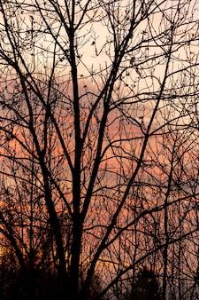 Sonnenunterganghimmel durch leeren baum