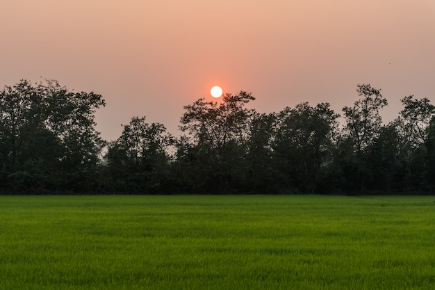 Sonnenunterganghimmel über städtischem reisfeld in thailand