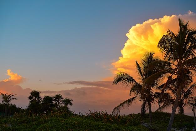 Sonnenunterganghimmelkokosnusspalmen in karibischen meeren