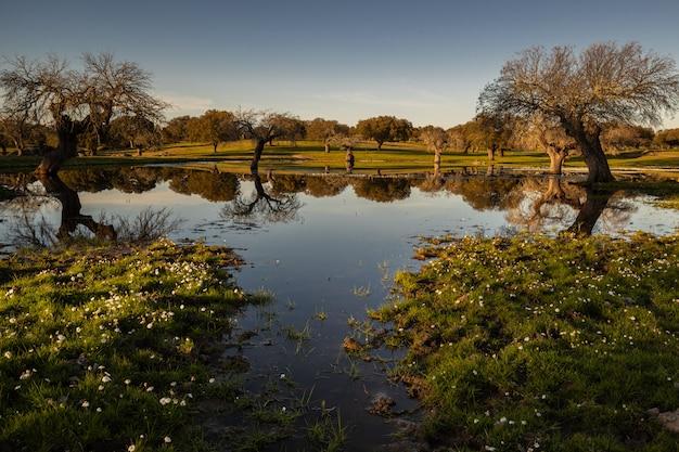 Sonnenuntergangslandschaft in einer lagune nahe arroyo de la luz. extremadura. spanien.