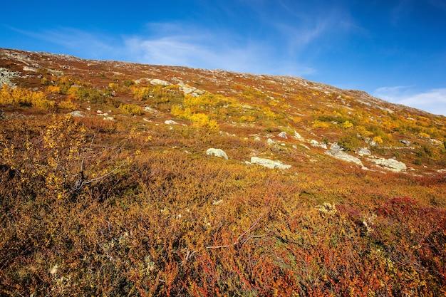 Sonnige herbstlandschaft norwegen gamle strynefjellsvegen