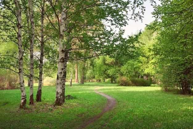 Sonnige lichtung in einem landschaftsgarten ein weg im gras frisches frühlingslaub auf den birken