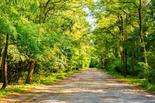 Sonnige straße im wald, umgeben von den grünen bäumen im sommer