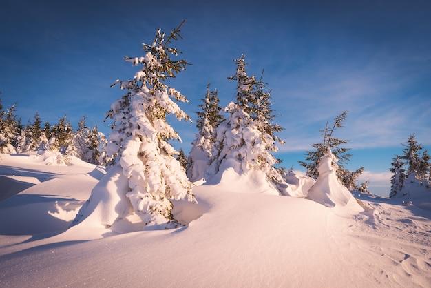 Sonnige winterlandschaft mit schneebedeckten bäumen. weihnachtsansicht