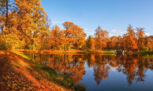 Sonniger öffentlicher herbstpark mit goldenen bäumen über einem teich und leuten, die herumlaufen. zarskoje selo. russland.