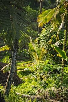 Sonniger tag auf der tropischen insel, exotische palmen wachsen in friedlichem land stockfoto