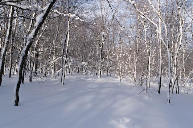 Sonniger tag im winter im schneewald