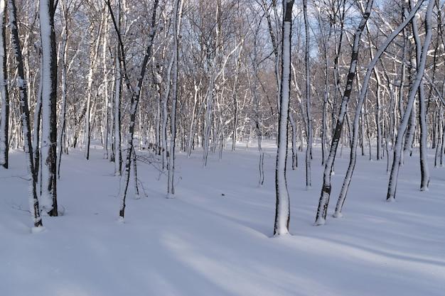 Sonniger tag im winterpark im schnee