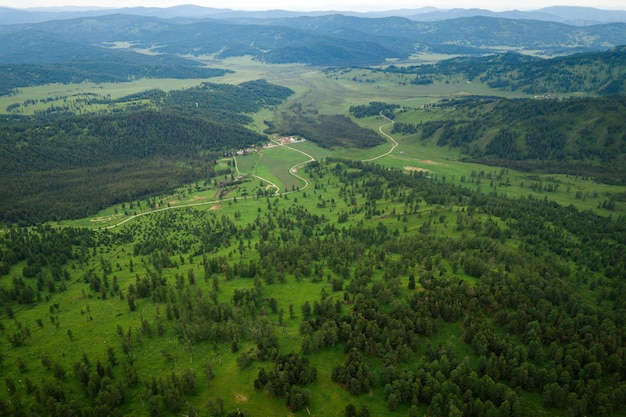 Sonniger tag in einem nadelwald, ein berg mit einem gebirgszug