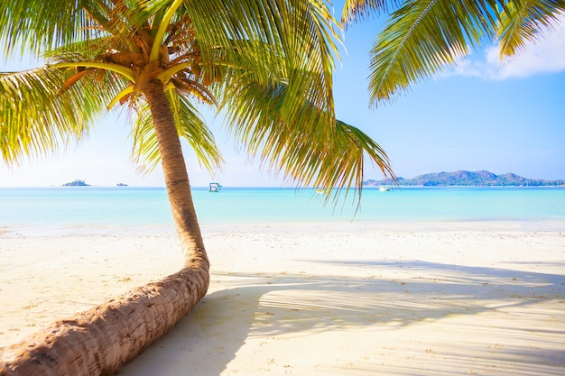 Sonniger tropischer paradiesstrand mit weißem sand und palmen