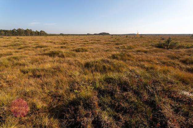 Sonniges panorama des grasbewachsenen sumpfes im frühherbst