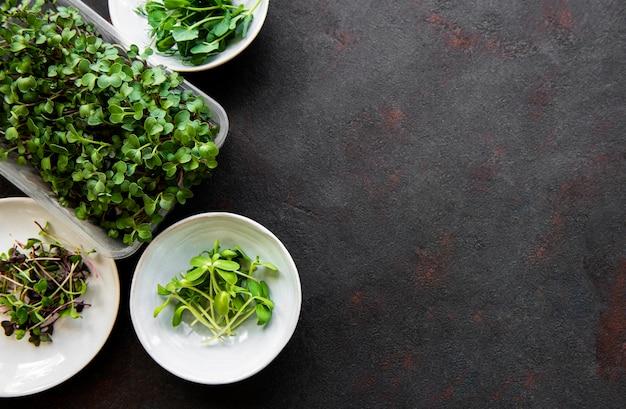 Sortiment von mikrogrüns auf schwarzem hintergrund, kopierraum, draufsicht. gesunder lebensstil