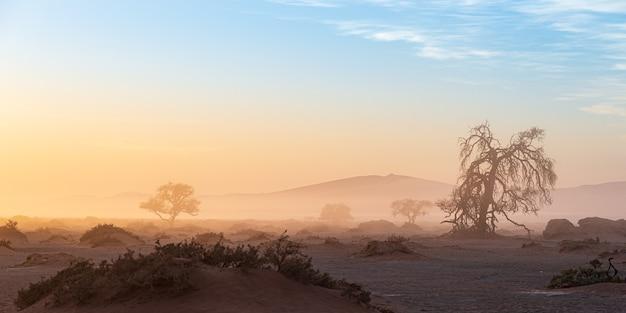 Sossusvlei, namibia. akazienbaum und sanddünen im morgenlicht, nebel und nebel